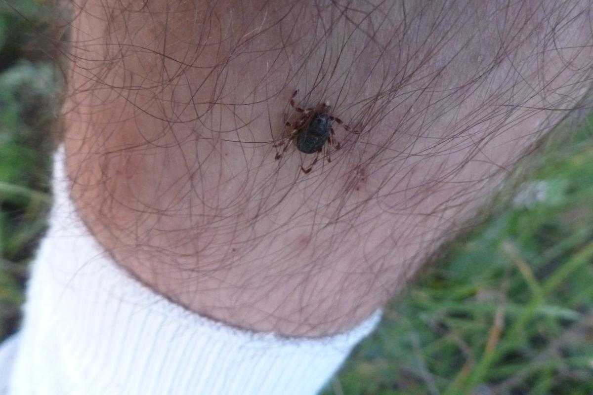 https://www.indianalymeconnect.org/wp-content/uploads/2018/05/prevention-before-go-outdoors-tick-crawl-up.jpg